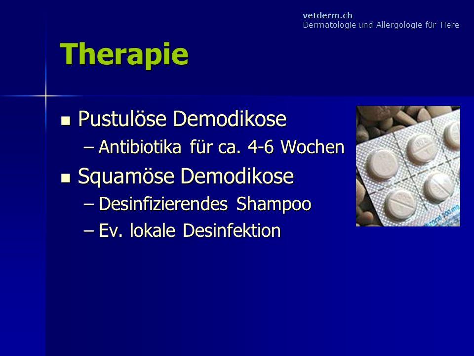 Therapie Pustulöse Demodikose Squamöse Demodikose