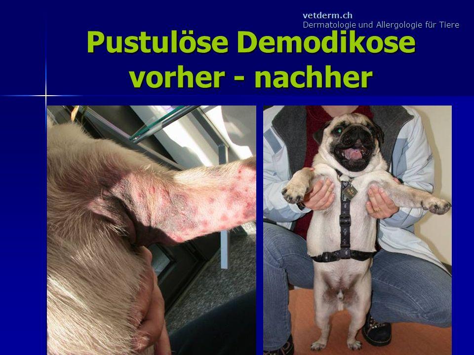 Pustulöse Demodikose vorher - nachher