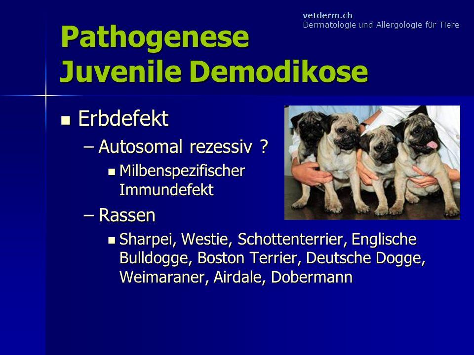 Pathogenese Juvenile Demodikose
