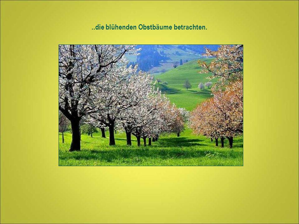 ..die blühenden Obstbäume betrachten.
