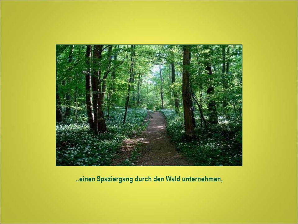..einen Spaziergang durch den Wald unternehmen,
