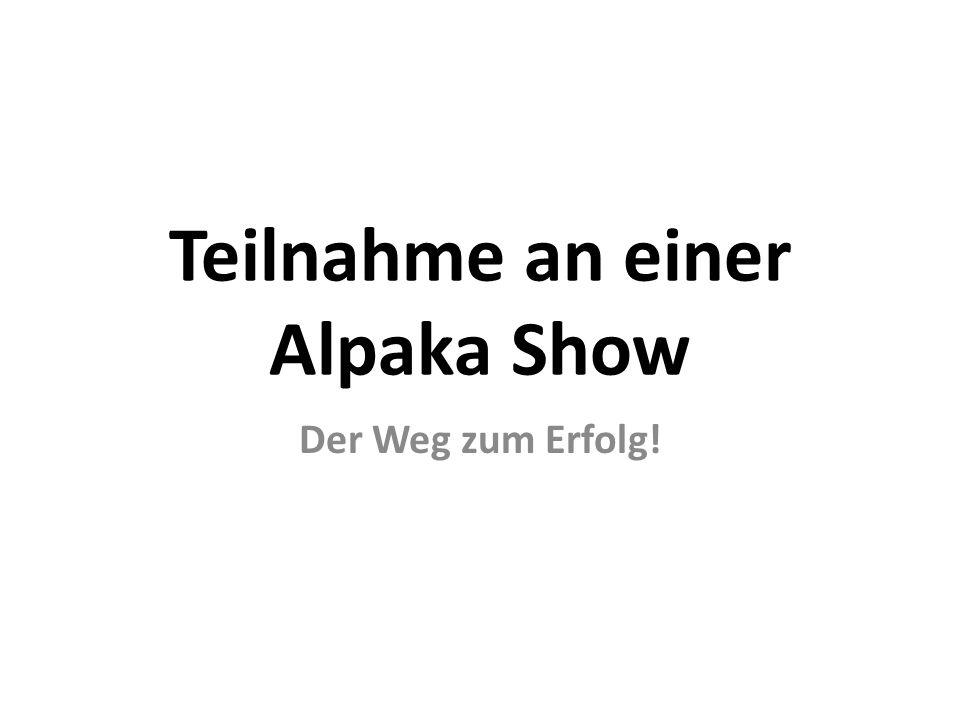 Teilnahme an einer Alpaka Show