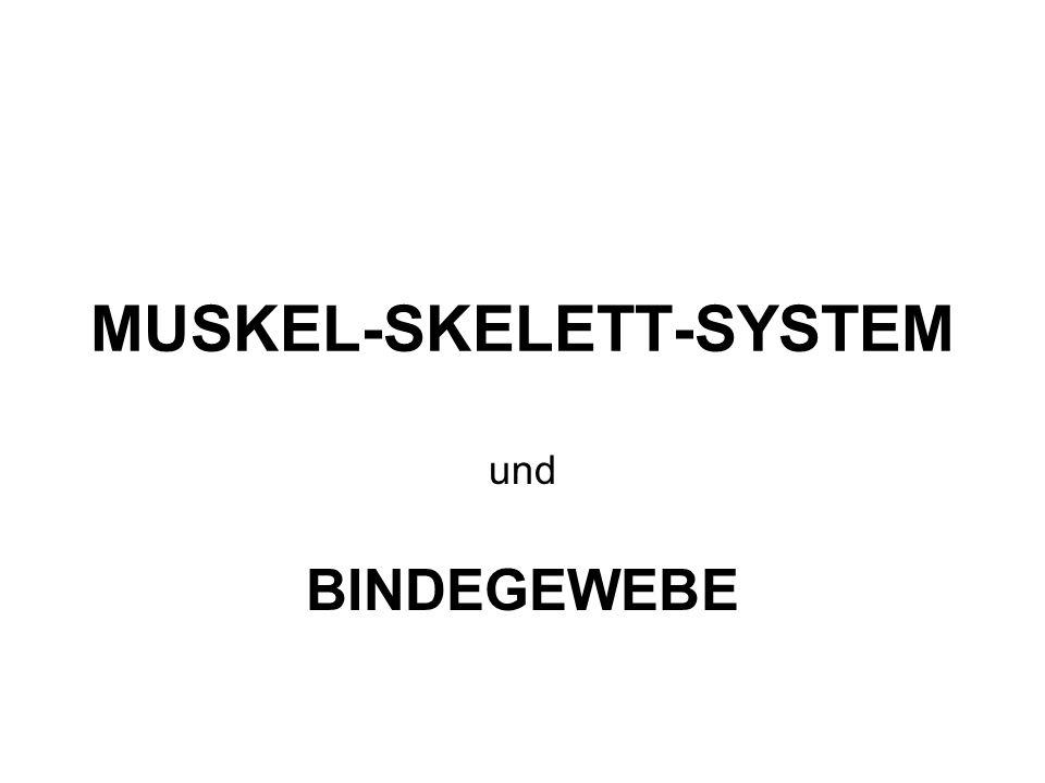 MUSKEL-SKELETT-SYSTEM