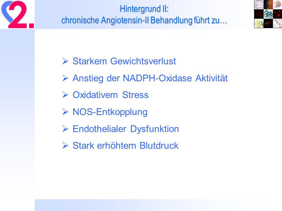 Hintergrund II: chronische Angiotensin-II Behandlung führt zu…