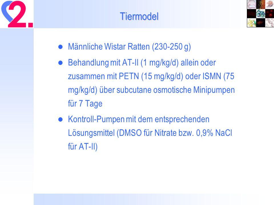 Tiermodel Männliche Wistar Ratten (230-250 g)