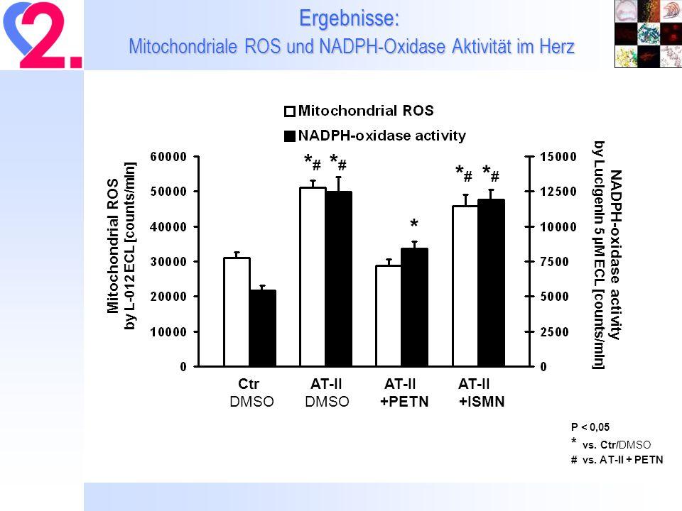 Ergebnisse: Mitochondriale ROS und NADPH-Oxidase Aktivität im Herz