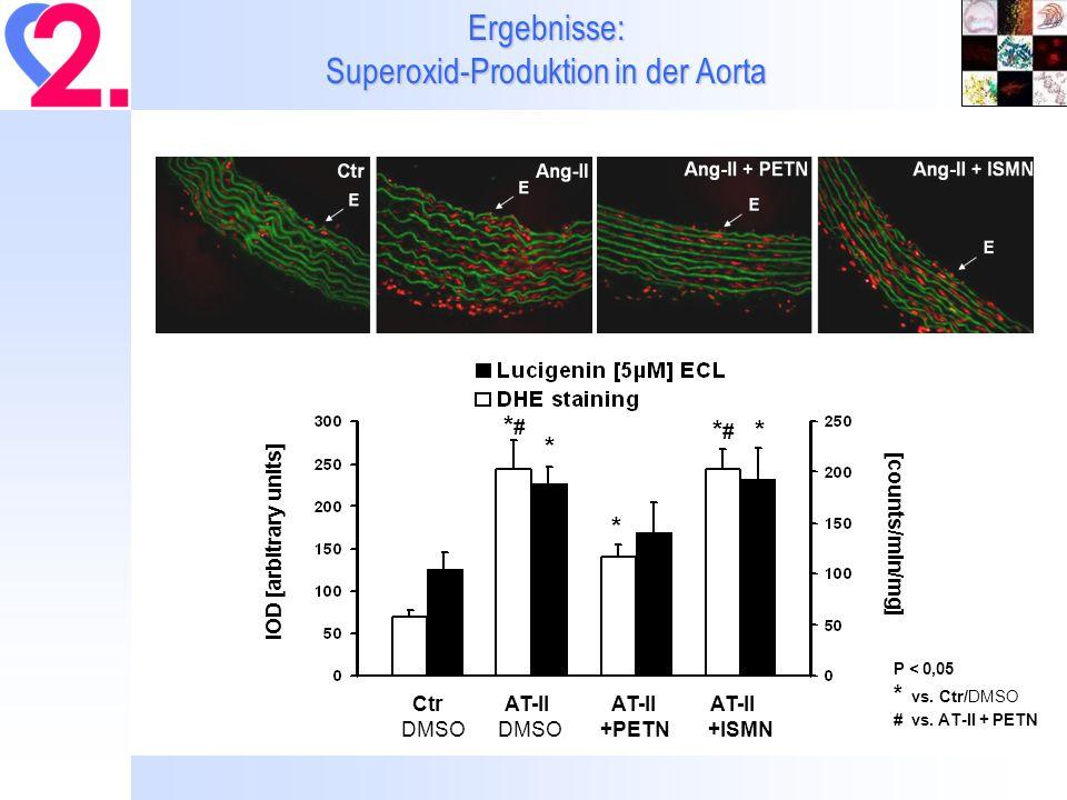 Ergebnisse: Superoxid-Produktion in der Aorta