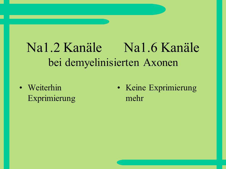 Na1.2 Kanäle Na1.6 Kanäle bei demyelinisierten Axonen
