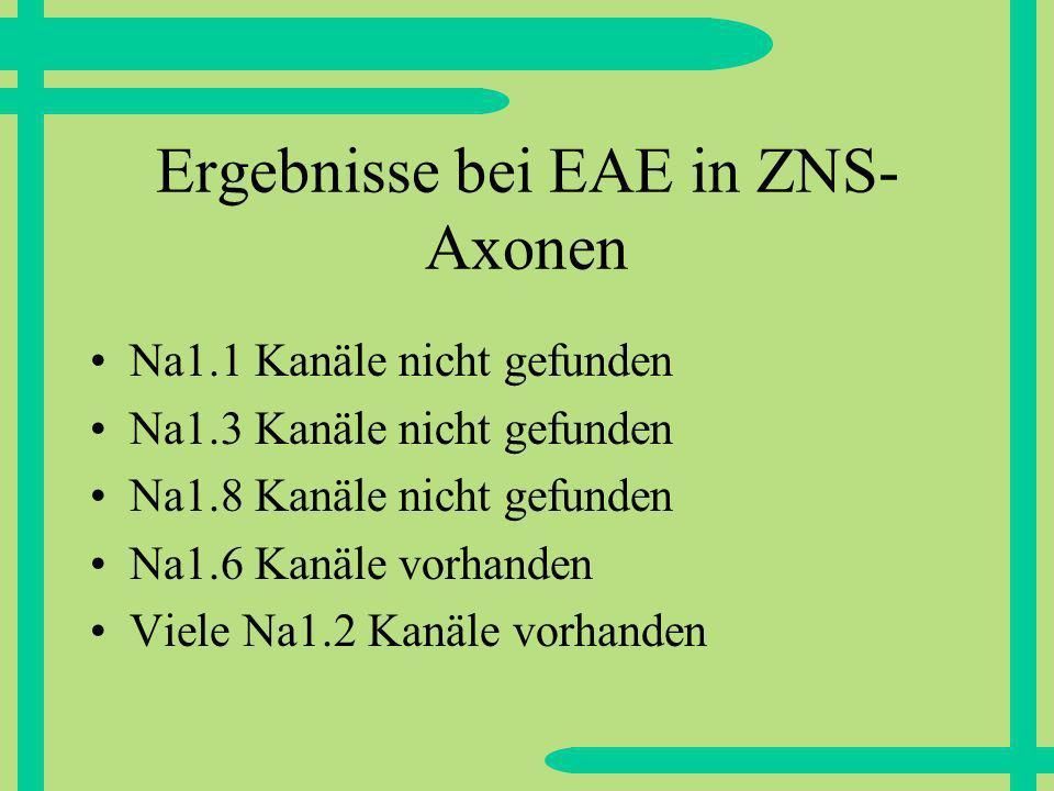 Ergebnisse bei EAE in ZNS-Axonen