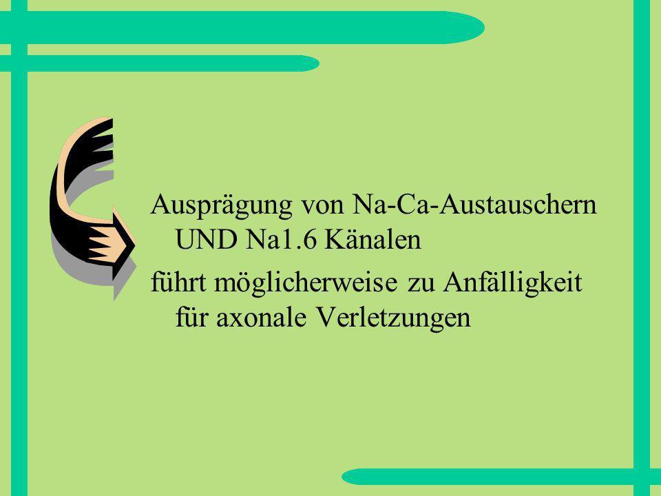 Ausprägung von Na-Ca-Austauschern UND Na1.6 Känalen