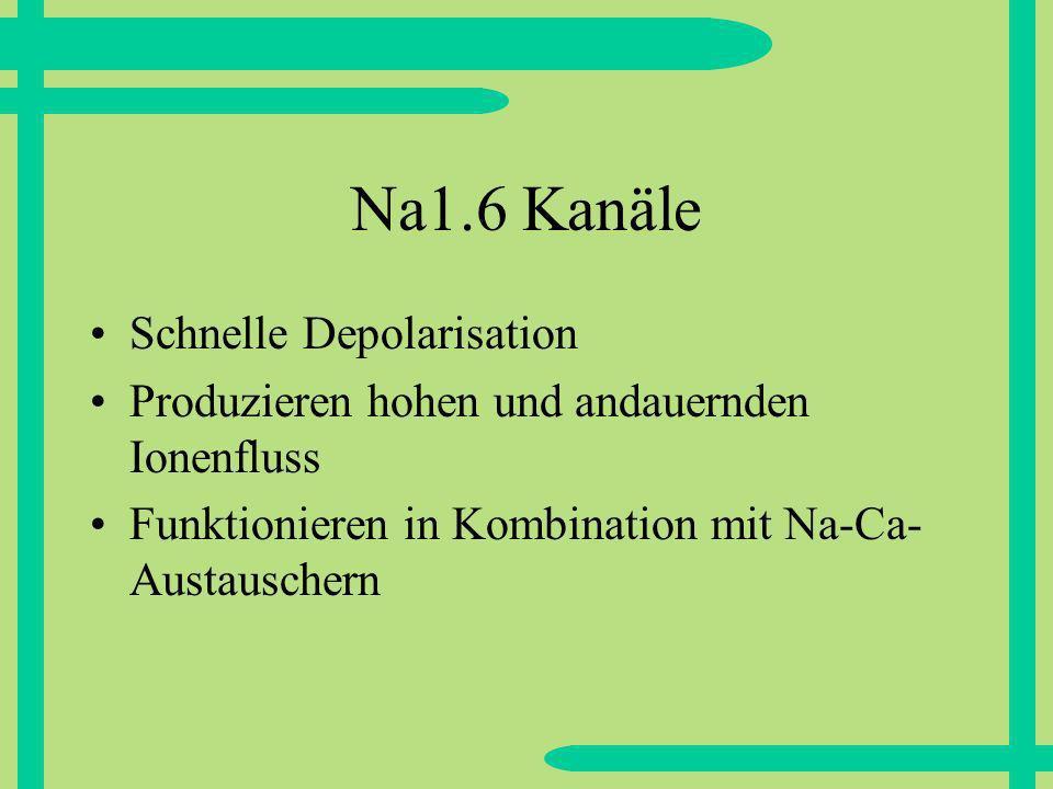 Na1.6 Kanäle Schnelle Depolarisation