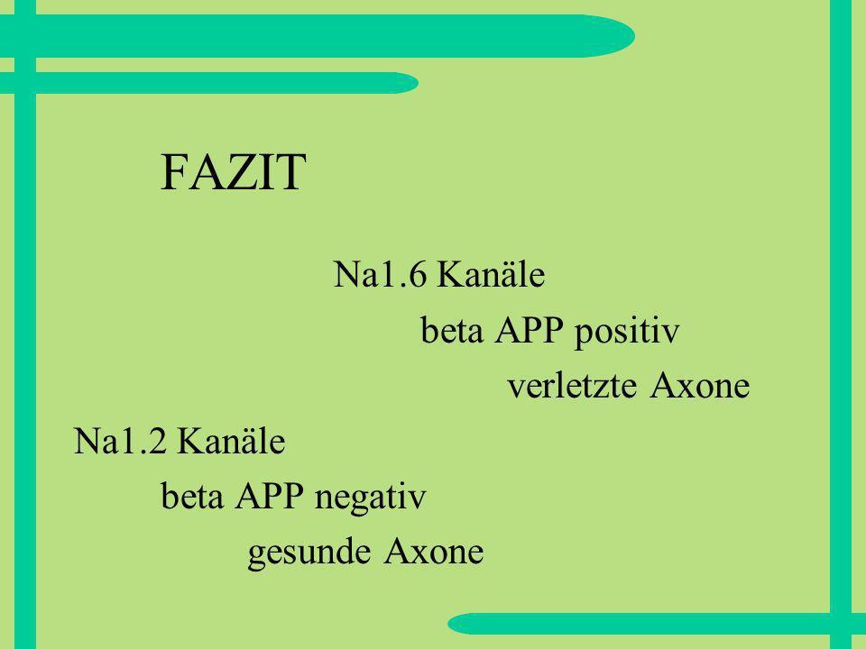 FAZIT Na1.6 Kanäle beta APP positiv verletzte Axone Na1.2 Kanäle