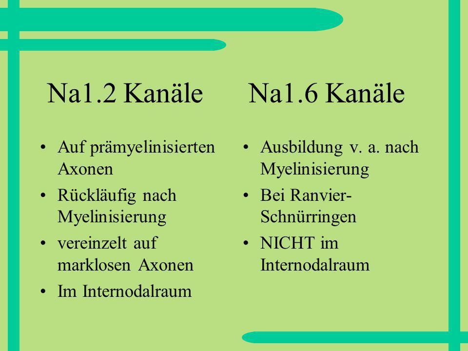 Na1.2 Kanäle Na1.6 Kanäle Auf prämyelinisierten Axonen
