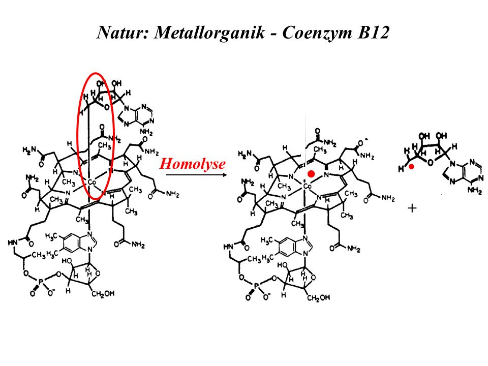 Natur: Metallorganik - Coenzym B12