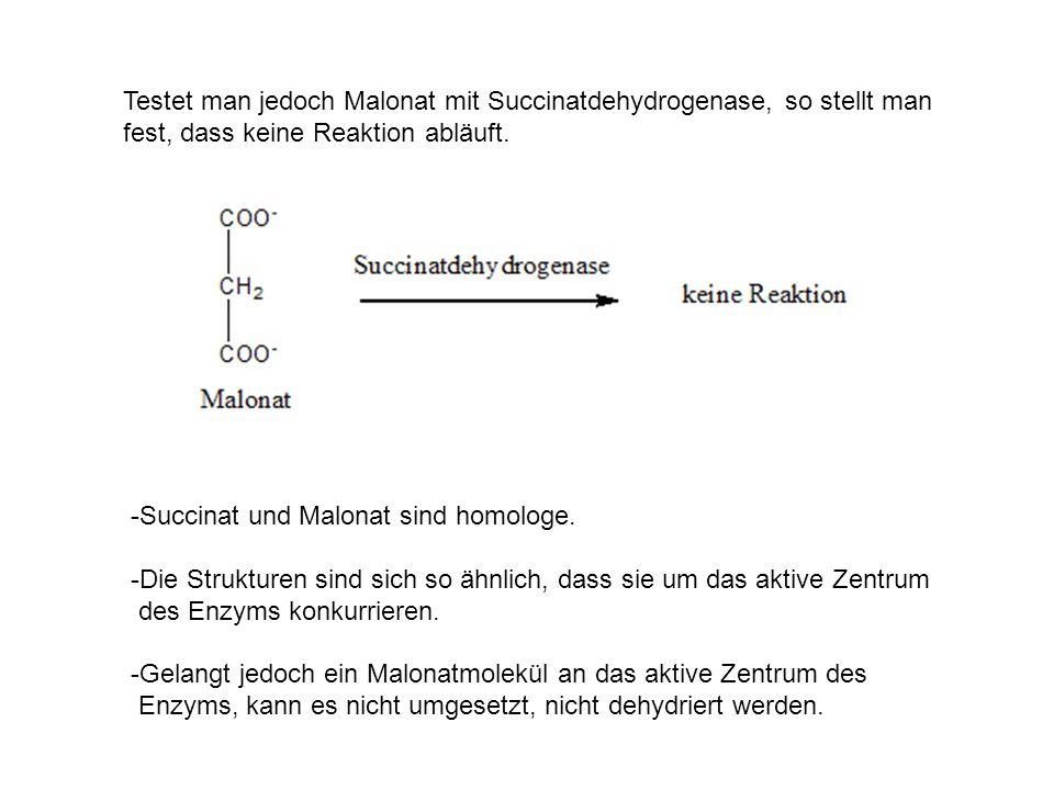 Testet man jedoch Malonat mit Succinatdehydrogenase, so stellt man fest, dass keine Reaktion abläuft.