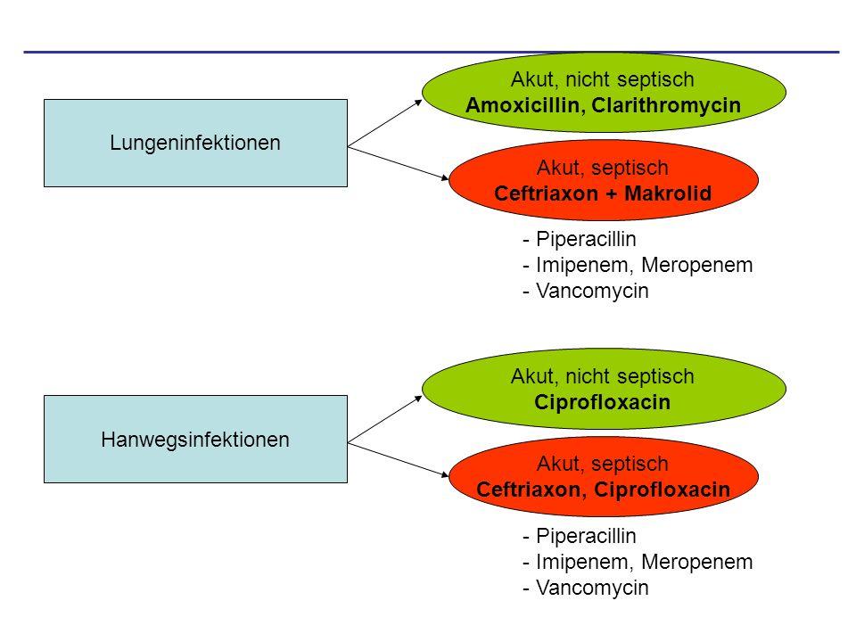 Amoxicillin, Clarithromycin Ceftriaxon, Ciprofloxacin