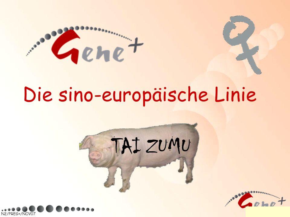 Die sino-europäische Linie