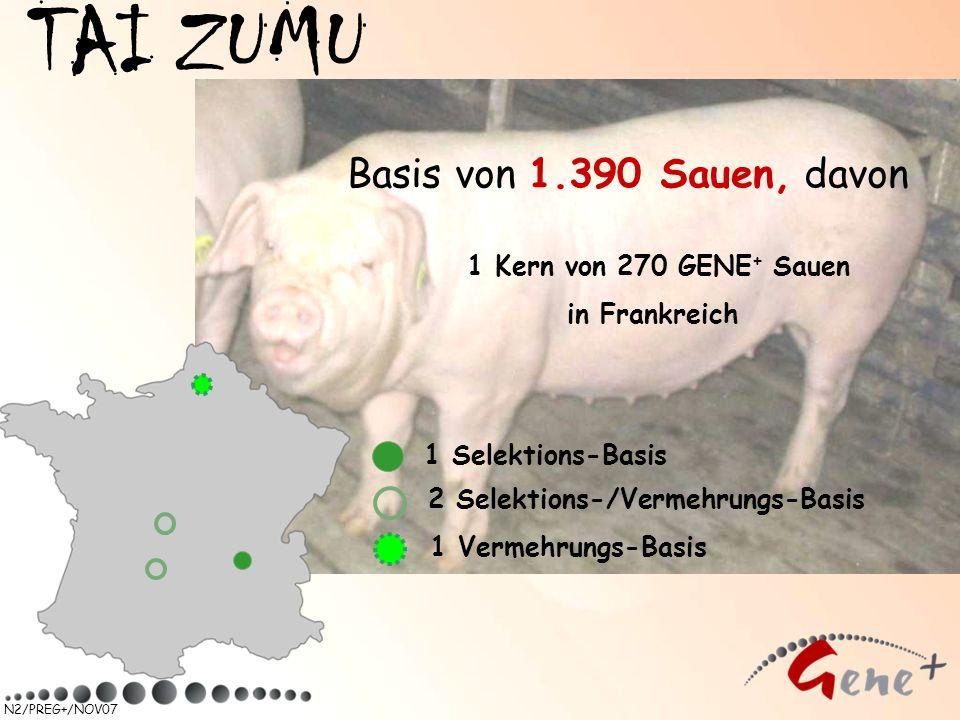 TAI ZUMU Basis von 1.390 Sauen, davon 1 Kern von 270 GENE+ Sauen