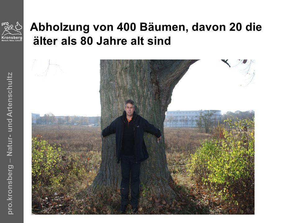 Abholzung von 400 Bäumen, davon 20 die älter als 80 Jahre alt sind