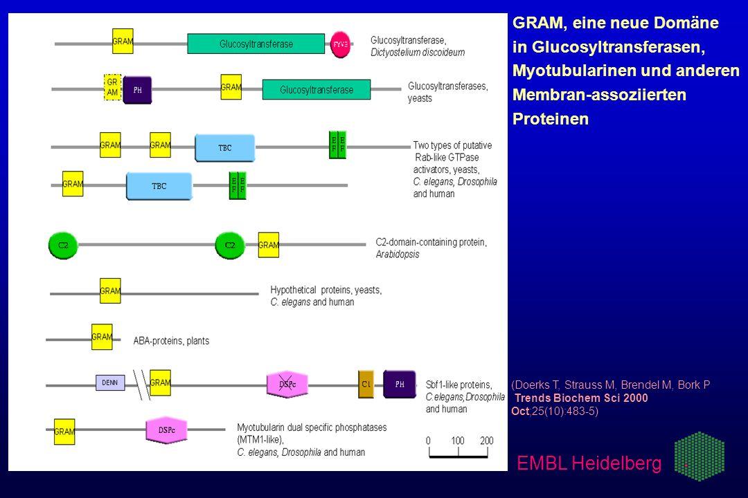EMBL Heidelberg GRAM, eine neue Domäne in Glucosyltransferasen,