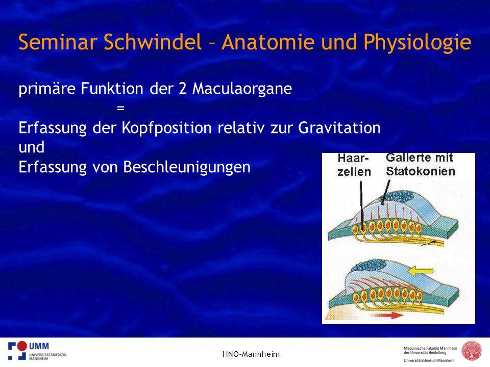 Seminar Schwindel – Anatomie und Physiologie