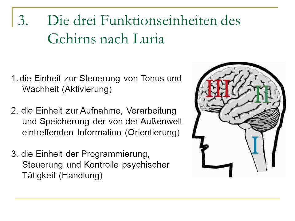 3. Die drei Funktionseinheiten des Gehirns nach Luria