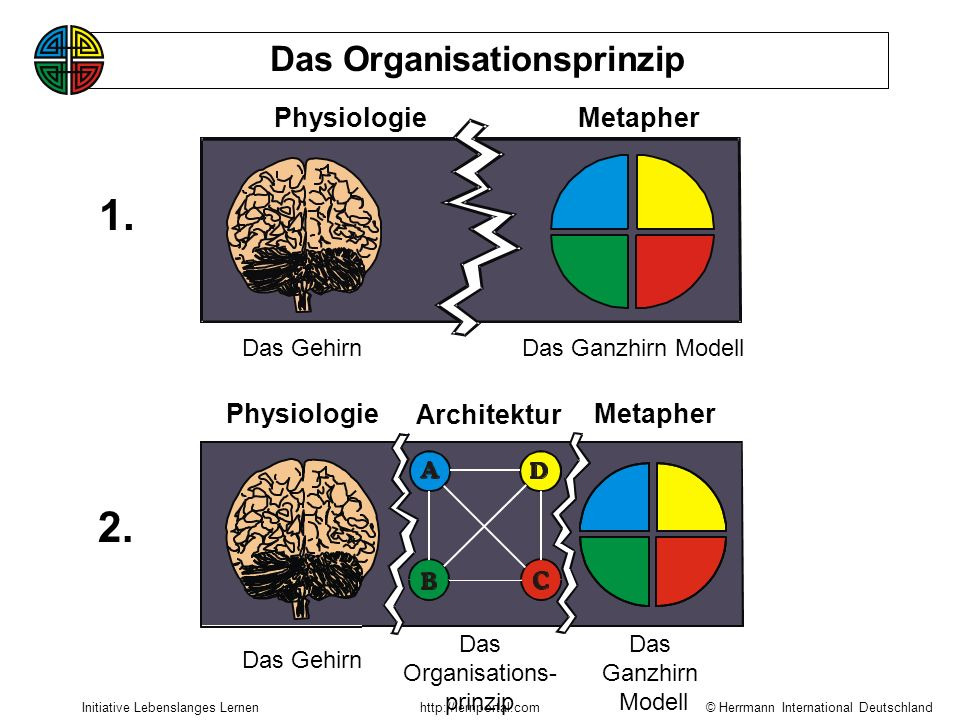 1. 2. Das Organisationsprinzip Physiologie Metapher Physiologie