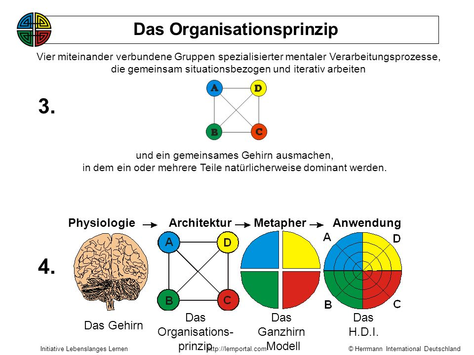 3. 4. Das Organisationsprinzip Physiologie Architektur Metapher