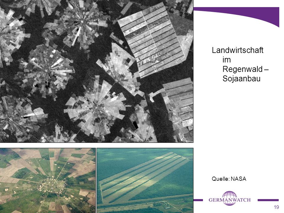 Landwirtschaft im Regenwald – Sojaanbau
