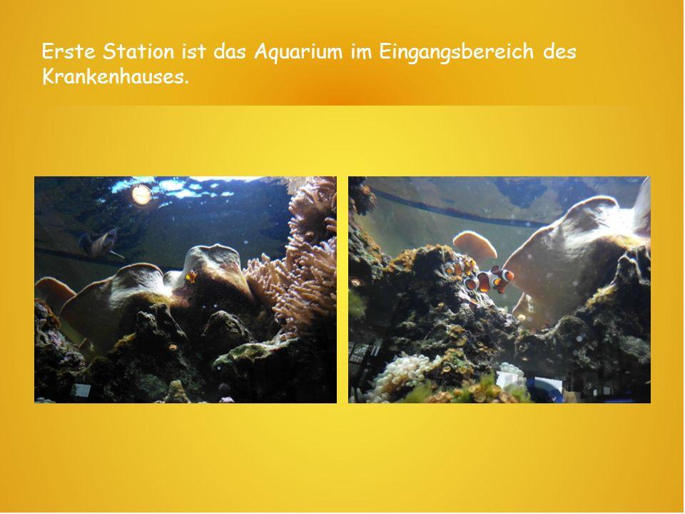 Erste Station ist das Aquarium im Eingangsbereich des Krankenhauses.