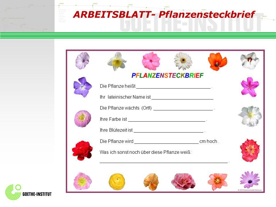 ARBEITSBLATT- Pflanzensteckbrief