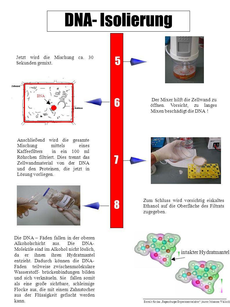 DNA- Isolierung 5 6 7 8 intakter Hydratmantel