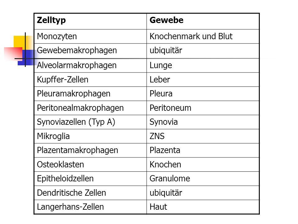 Zelltyp Gewebe. Monozyten. Knochenmark und Blut. Gewebemakrophagen. ubiquitär. Alveolarmakrophagen.
