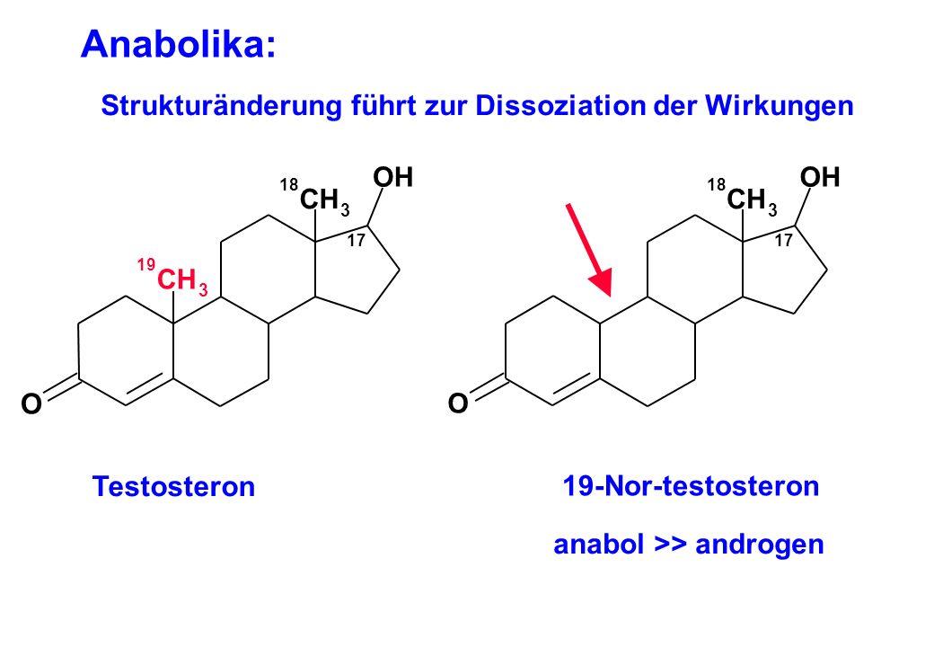 Anabolika: Strukturänderung führt zur Dissoziation der Wirkungen O