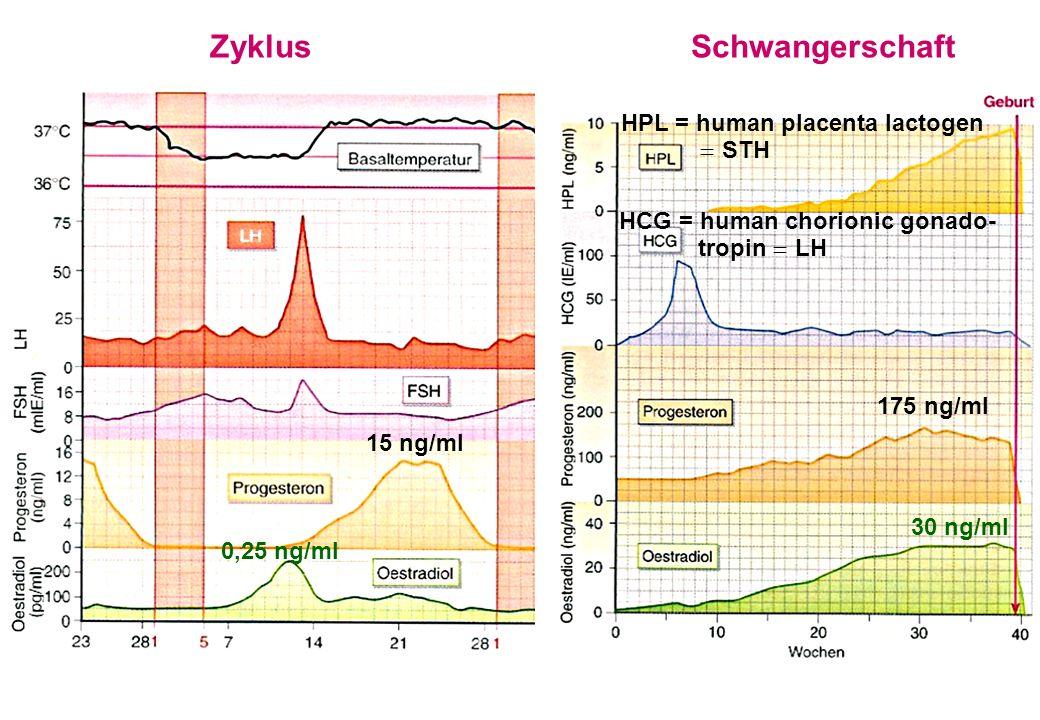 Zyklus Schwangerschaft HPL = human placenta lactogen  STH