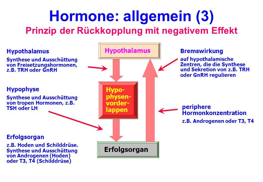 Hormone: allgemein (3) Prinzip der Rückkopplung mit negativem Effekt