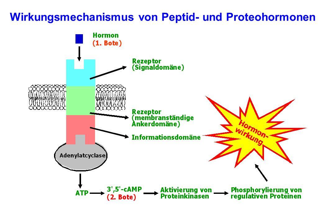 Wirkungsmechanismus von Peptid- und Proteohormonen