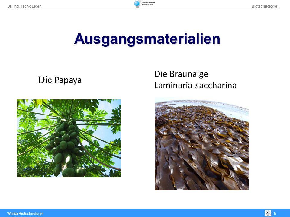 Ausgangsmaterialien Die Braunalge Laminaria saccharina Die Papaya