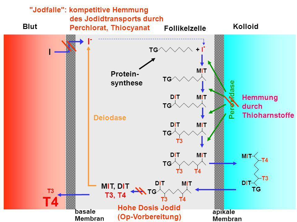 T4 I- I Jodfalle : kompetitive Hemmung des Jodidtransports durch