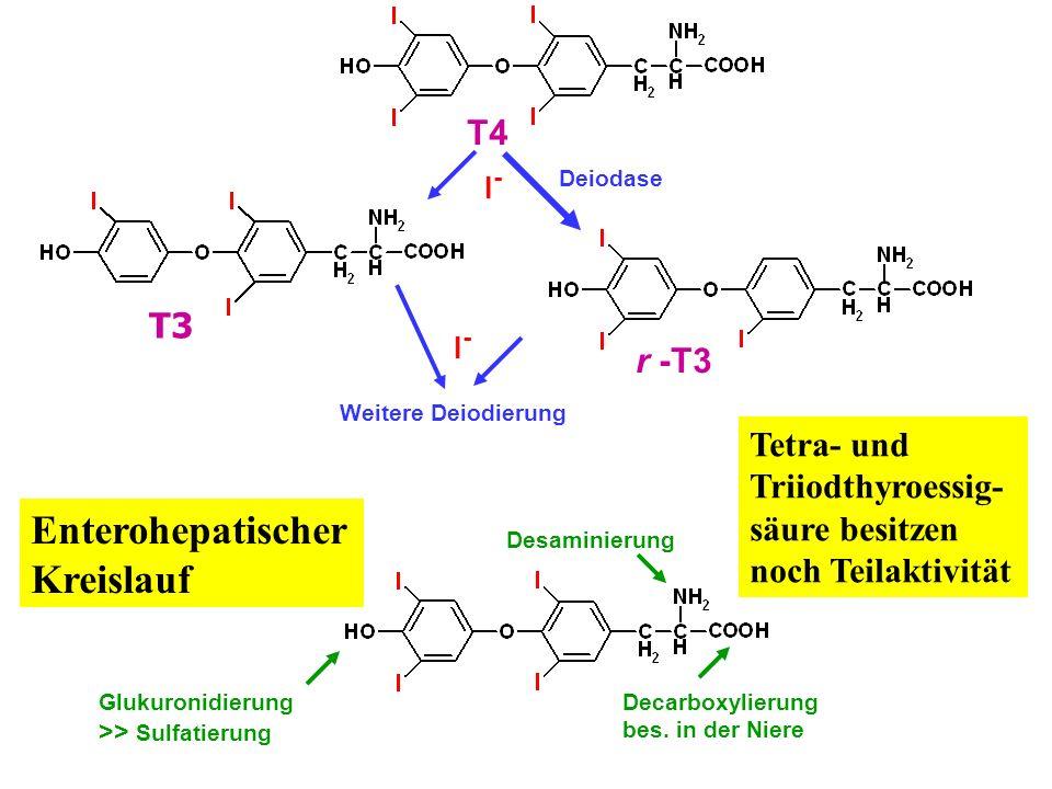 Enterohepatischer Kreislauf T4 T3 r -T3 Tetra- und Triiodthyroessig-