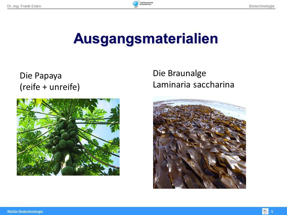 Ausgangsmaterialien Die Braunalge Die Papaya Laminaria saccharina