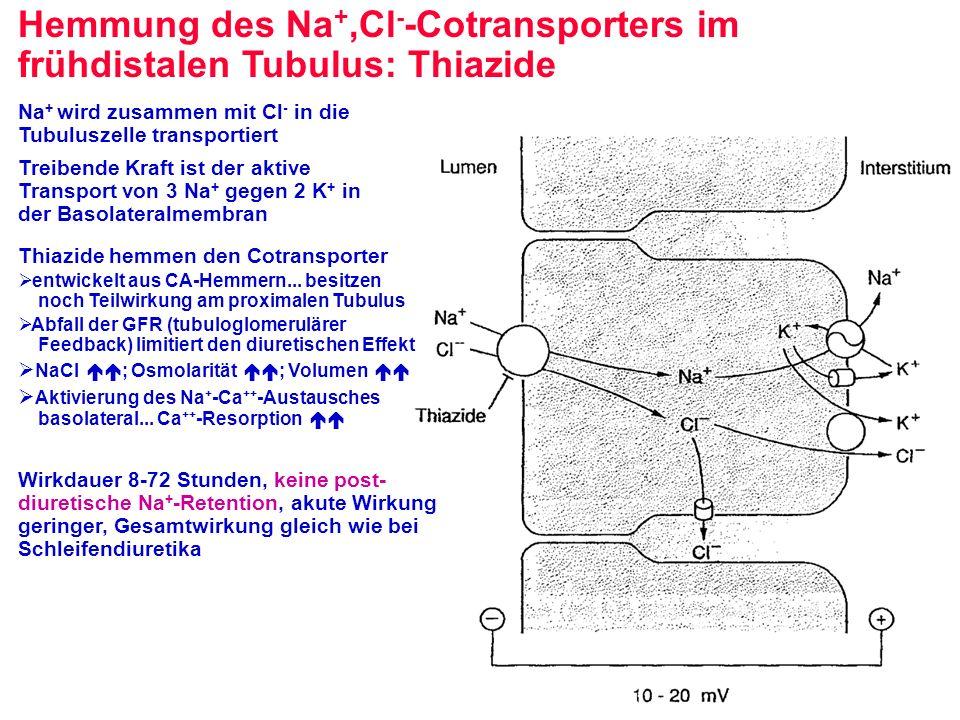 Hemmung des Na+,Cl--Cotransporters im frühdistalen Tubulus: Thiazide