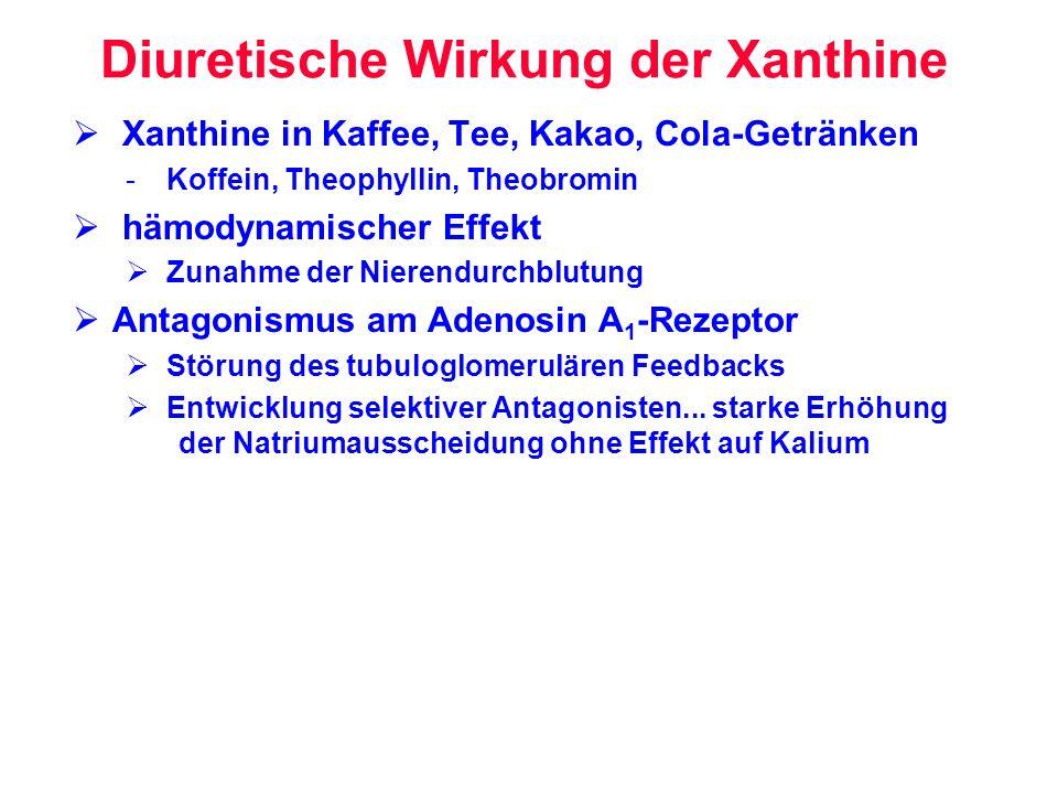 Diuretische Wirkung der Xanthine