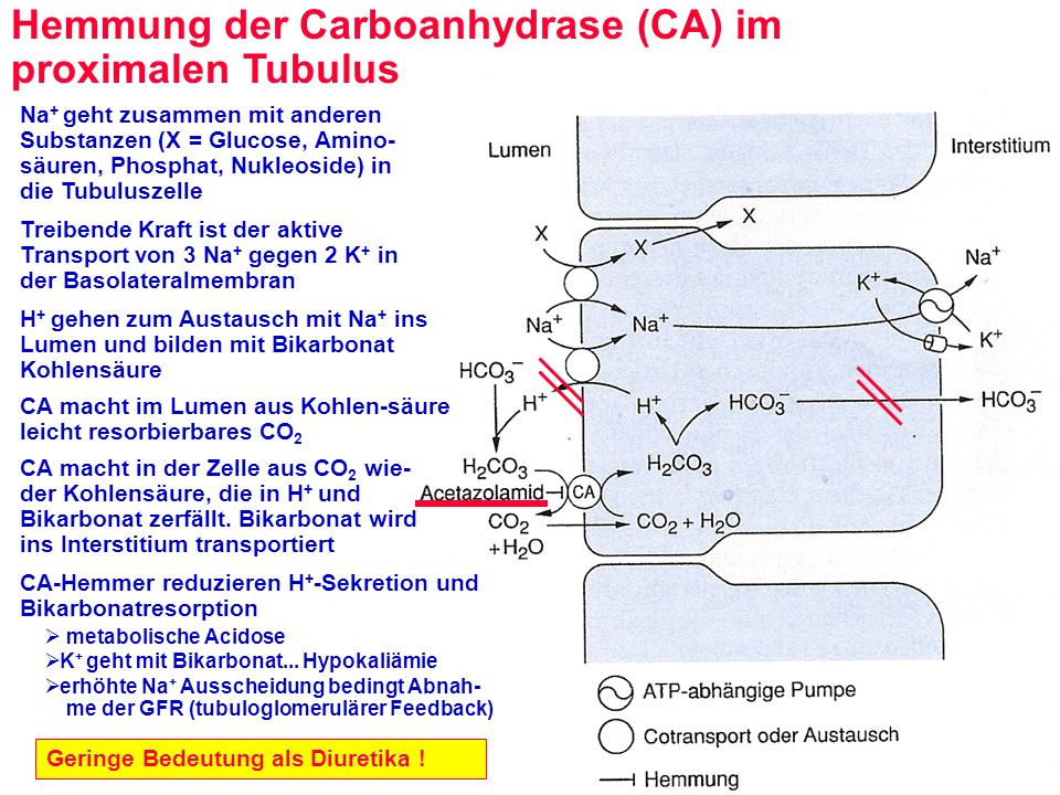 Hemmung der Carboanhydrase (CA) im proximalen Tubulus