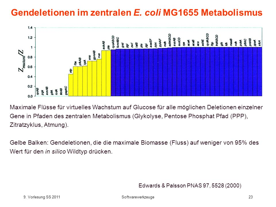 Gendeletionen im zentralen E. coli MG1655 Metabolismus