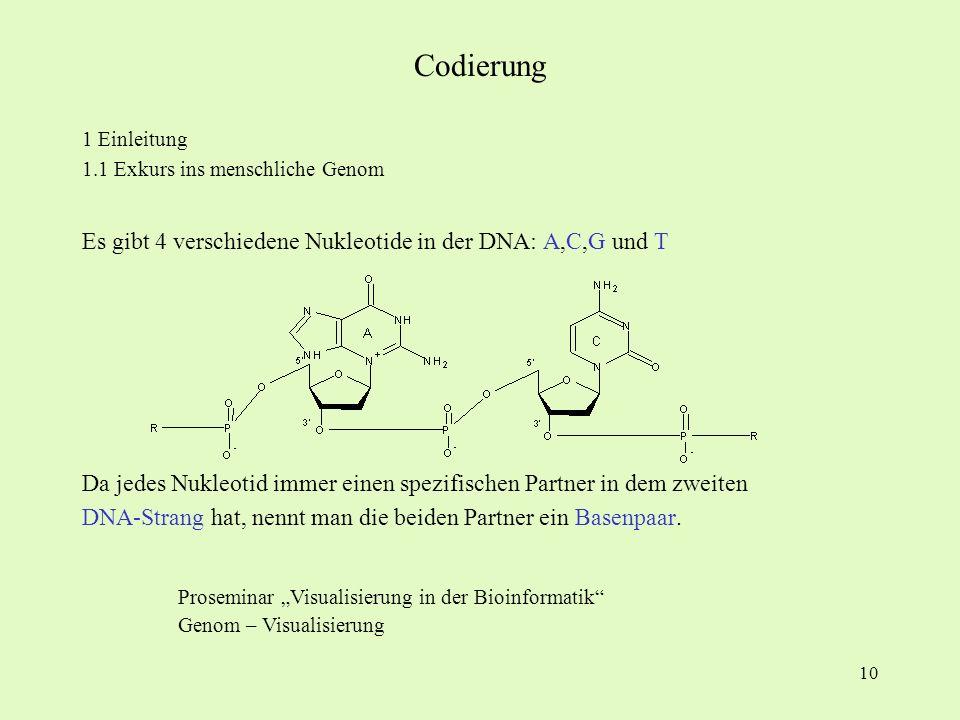 Codierung Es gibt 4 verschiedene Nukleotide in der DNA: A,C,G und T