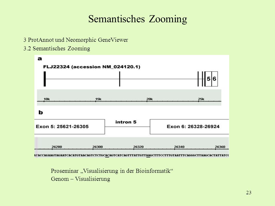 Semantisches Zooming 3 ProtAnnot und Neomorphic GeneViewer