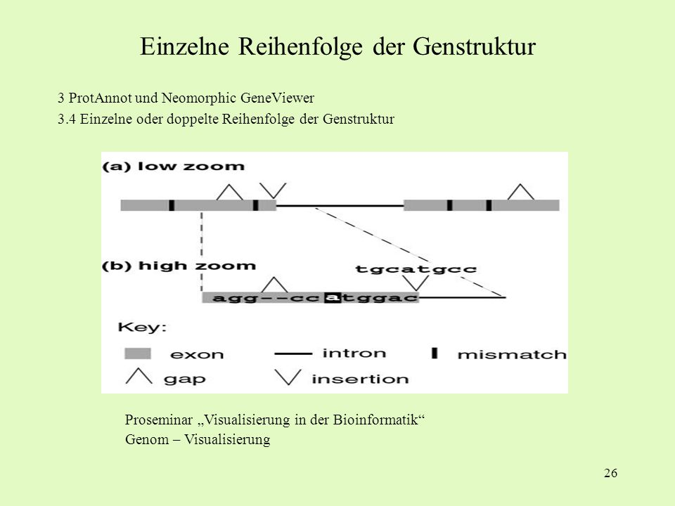 Einzelne Reihenfolge der Genstruktur