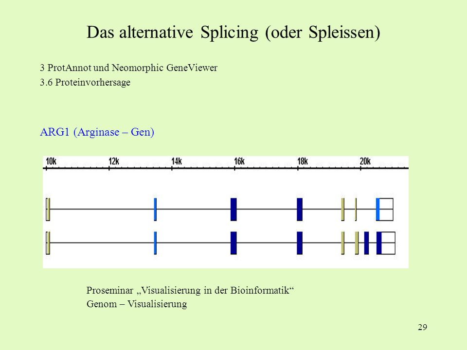 Das alternative Splicing (oder Spleissen)