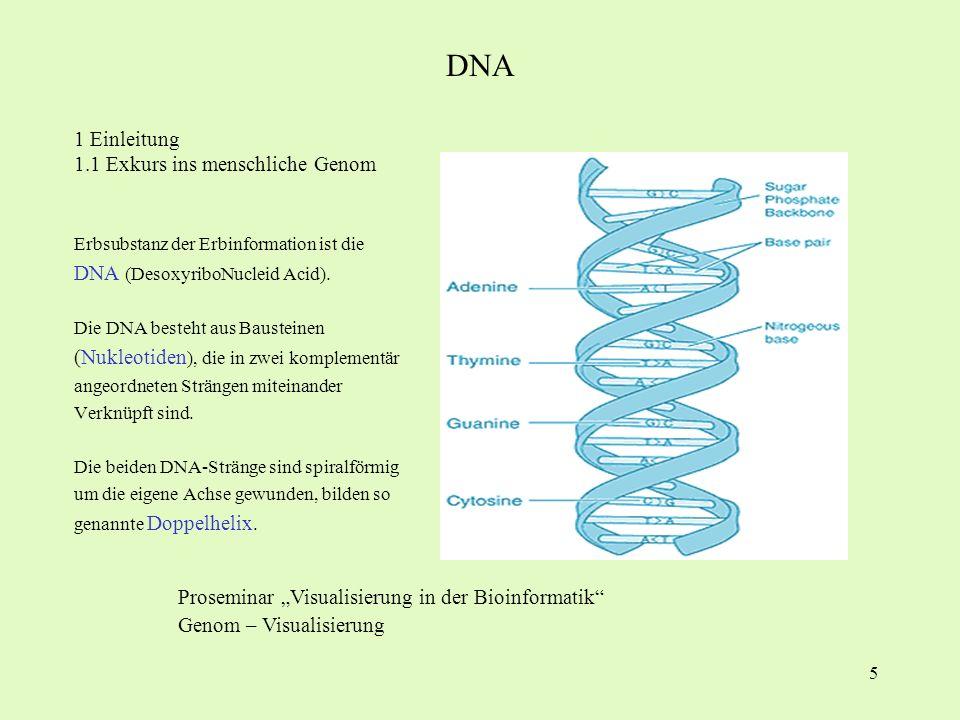 DNA 1 Einleitung 1.1 Exkurs ins menschliche Genom